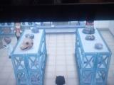 pokemon-xy-spoilers-18
